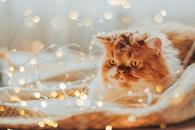 Kot otoczony lampkami choinkowymi