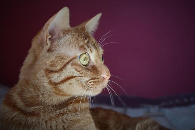 Kot patrząc w bok ze szczegółami w oku