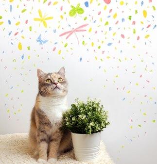 Kot patrzy na motyle. zdjęcie kota w jasnym wnętrzu. abstrakcyjne elementy kolorystyczne na tle.