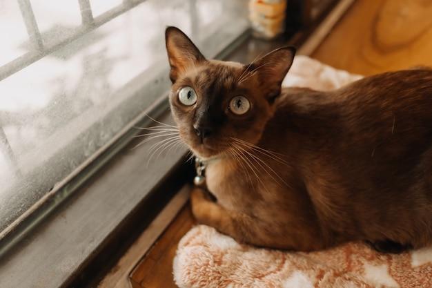 Kot patrzy w kamerę, relaksując się w oknach
