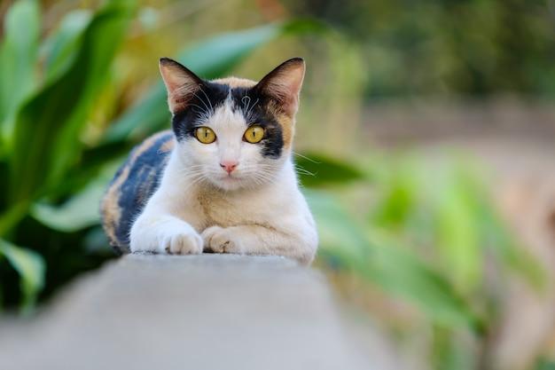 Kot patrzy w tę stronę i kopiuje przestrzeń