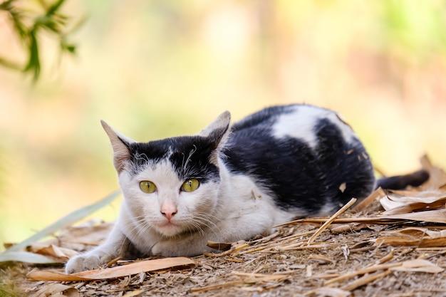 Kot patrzy w tę stronę