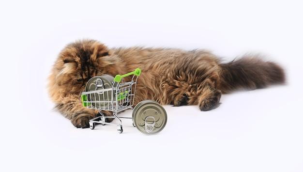 Kot perski pozowanie suche w pięknym stylu na białym tle. słodkie zwierzę domowe. tle przyrody. modne futro. kot rasowy. puszysty kotek. łapa kotka.