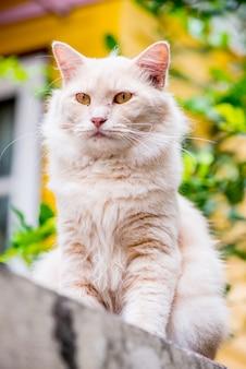 Kot perski, urocze zwierzę i zwierzak w ogrodzie