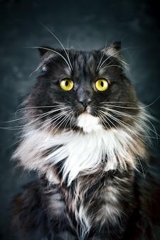 Kot, portret zabawnego kota o dużych żółtych oczach.