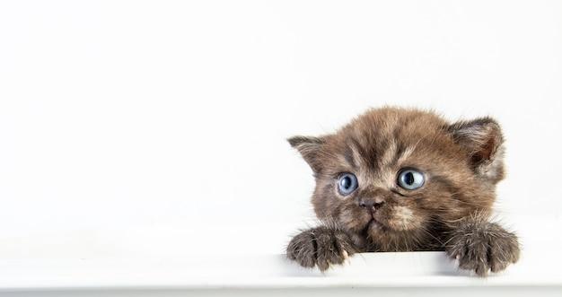 Kot pręgowany kotek kitten cute