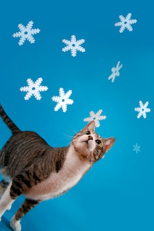 Kot przeciw błękitnemu tłu
