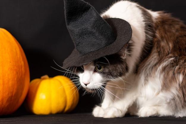Kot rasy maine coon w czarnym kapeluszu czarownicy