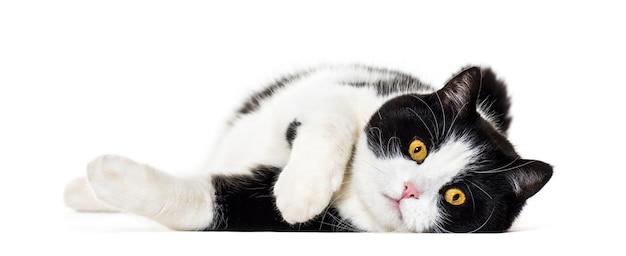 Kot rasy mieszanej leżącej na białym tle