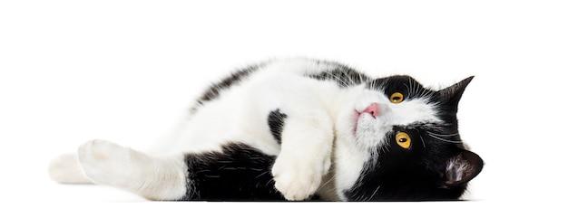 Kot rasy mieszanej leżący na boku na białym tle