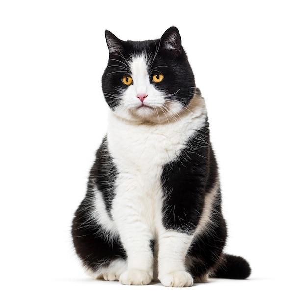 Kot rasy mieszanej siedzi na białym tle