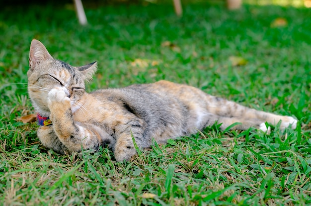 Kot relaksuje i czyści jej łapę.