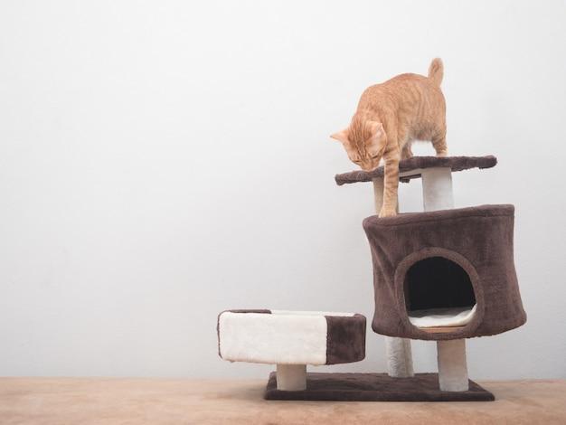 Kot schodzący z mieszkania dla kotów na tle białej ściany