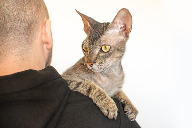 Kot sfinks leży na ramieniu mężczyzny w domu.skopiuj miejsce.