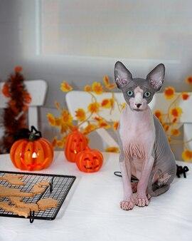 Kot sfinks świętuje halloween. siedząc na stole obok ciasteczek nietoperzy i dekoracji świątecznych.