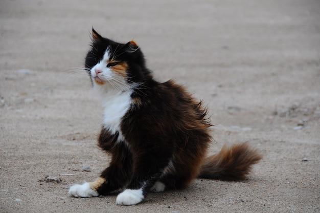 Kot się drapie. kot na zewnątrz drapie pchły na podwórku.