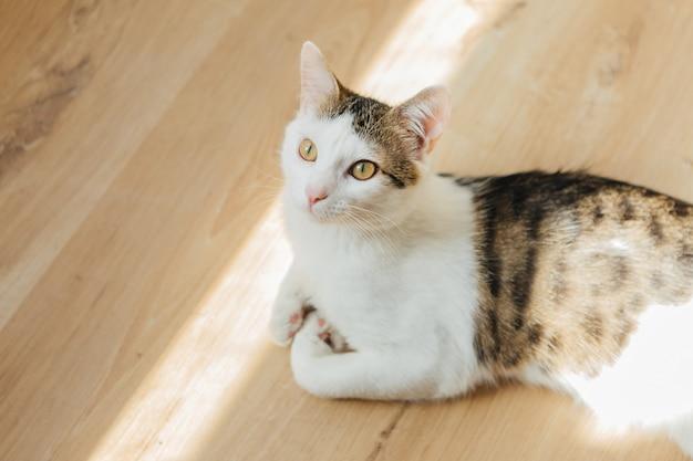 Kot siedzi na drewnianej podłodze. figlarny kot