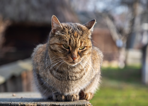 Kot siedzi na drewnianym pudełku