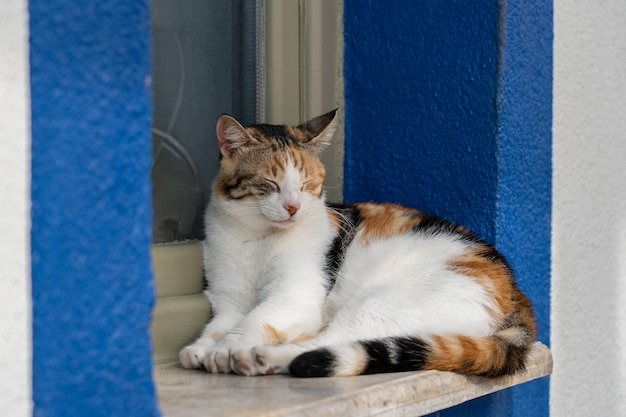 Kot siedzi na parapecie w pobliżu morza w kurorcie bodrum w turcji. ścieśniać