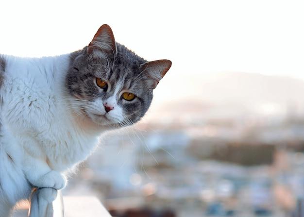 Kot siedzi na skraju tarasu, patrząc na krajobraz