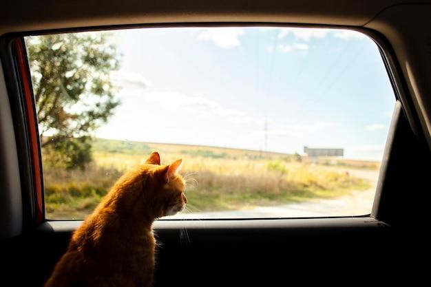 Kot siedzi na tylnym siedzeniu i patrzy na zewnątrz