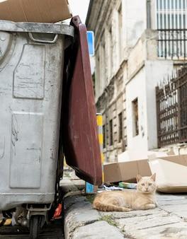 Kot siedzi obok kosza na śmieci na zewnątrz