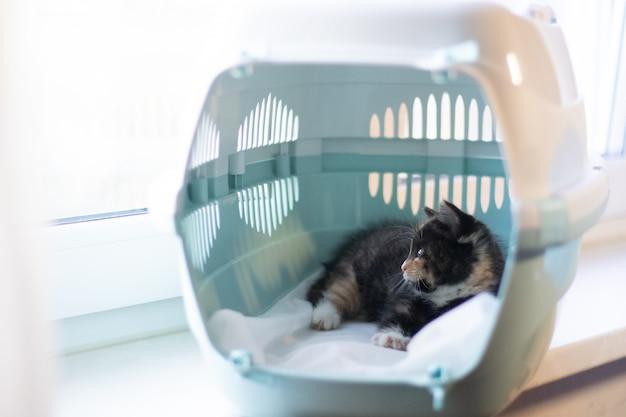 Kot siedzi w nosidełku dla zwierząt.