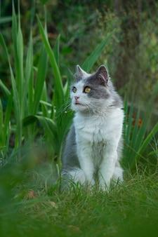 Kot siedzi w ogrodzie z wystającym językiem. śliczne i urocze zwierzęta