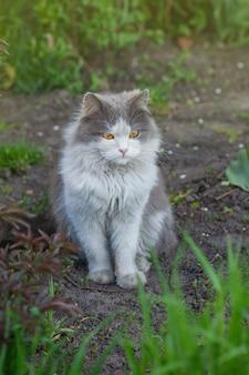 Kot siedzi w ogrodzie