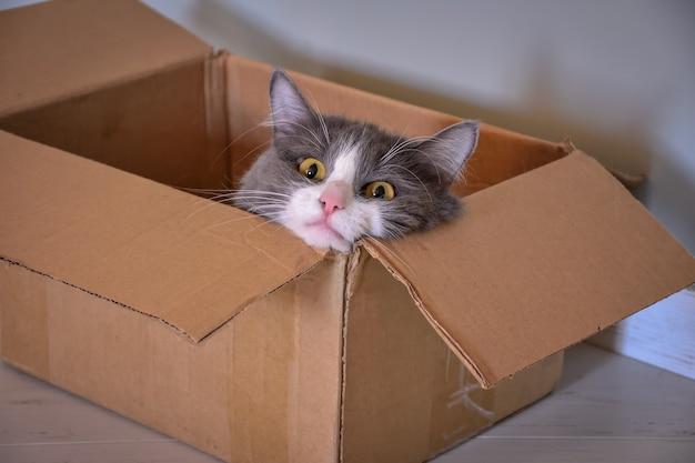 Kot siedzi w pudełku, portret kota