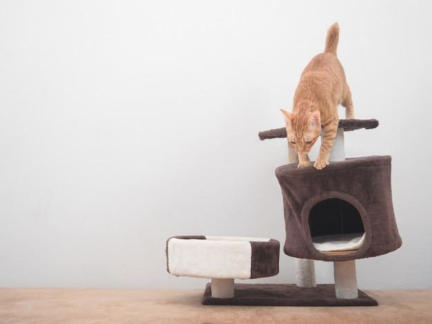 Kot skaczący z mieszkania dla kota na kanapie na białym tle