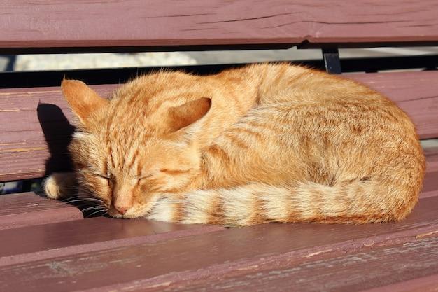 Kot śpi na drewnianej ławce