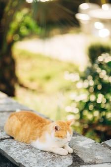 Kot śpi na skale
