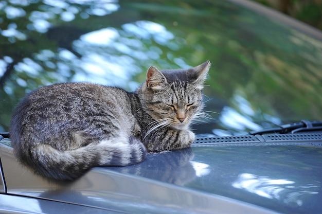 Kot spoczywa na masce samochodu