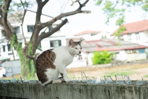 Kot stojący na ścianie, zwierzę domowe