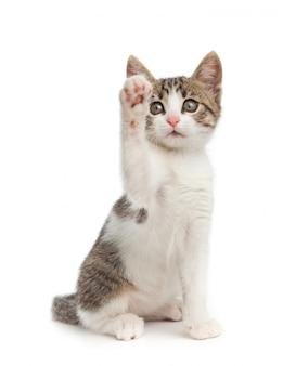 Kot szczeniak