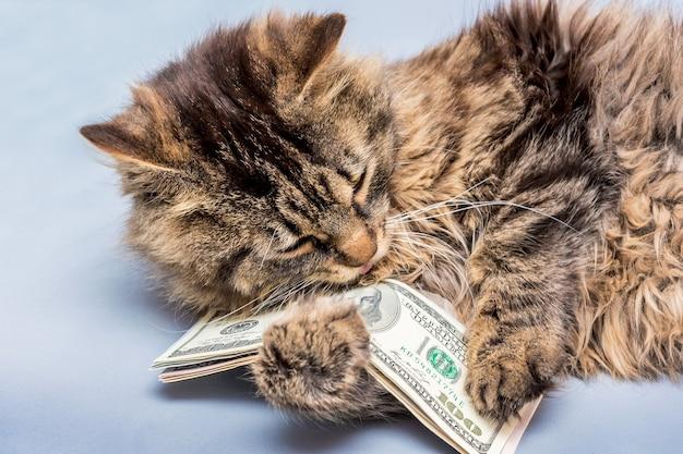 Kot trzyma w łapach dolary. bogactwo w naszych rękach