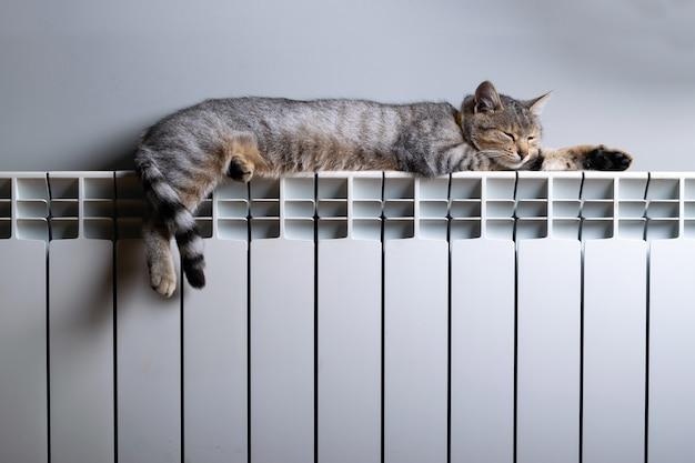 Kot tygrys relaksujący się na ciepłym grzejniku