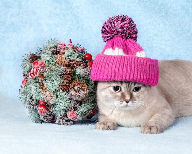 Kot w czapce z pomponem leżący obok świątecznej gałęzi na niebieskim kocu