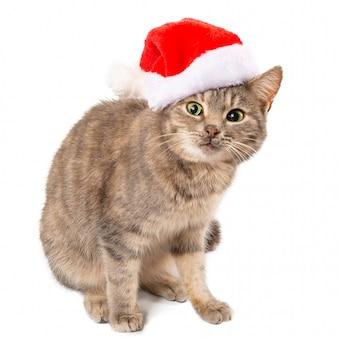 Kot w kapeluszu świętego mikołaja o zdziwionym lub przestraszonym spojrzeniu.