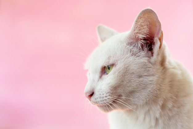 Kot w kolorze różowym