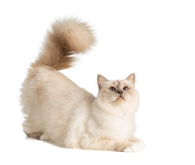 Kot w okresie lęgowym