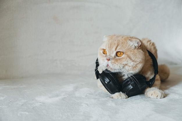 Kot w słuchawkach na jasnym tle audio głos sieć społecznościowa zaproszenie tylko aplikacja do czatu audio