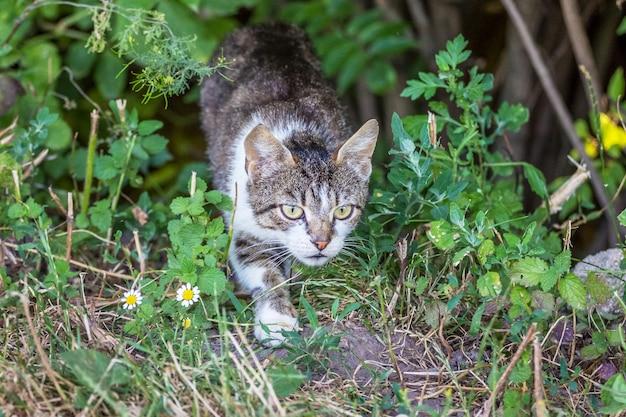 Kot w trawie zakrada się do swojego tyłka