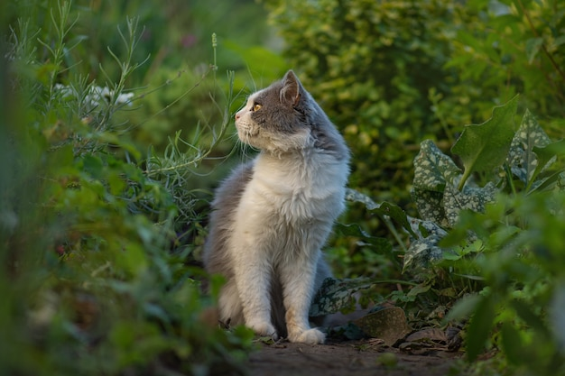 Kot w wiosennym kolorowym ogrodzie w piękny wiosenny dzień. kotek siedzi w kwiatach. kot siedzi w ogrodzie z zielonym trawnikiem. kot siedzi w ogrodzie