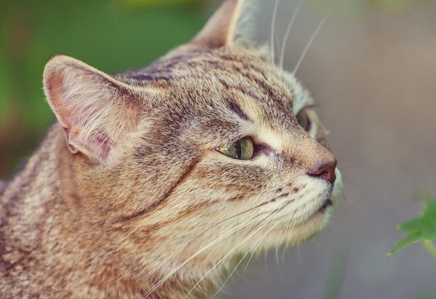 Kot w zielonej trawie