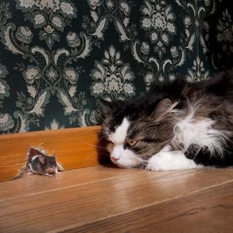 Kot wpatruje się w mysz wychodzącą z dziury