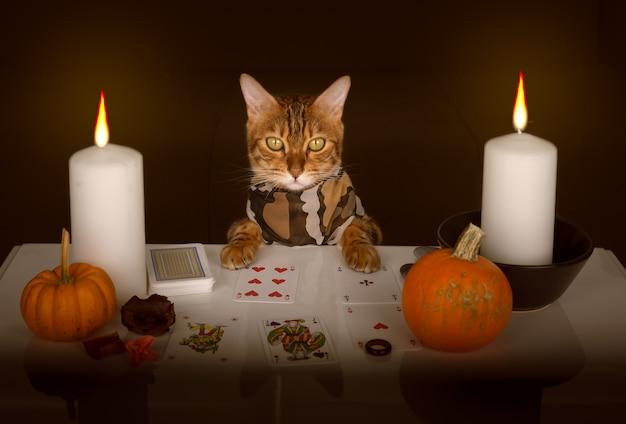 Kot wróżki rozkłada karty przy świecach. wróżby na halloween.