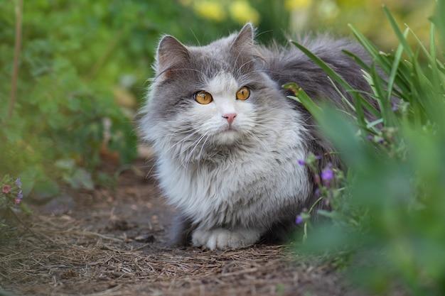 Kot wypoczywa w ogrodzie