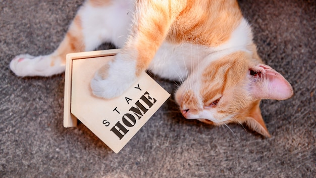 Kot z drewnianym domem. poddaj się kwarantannie i zostań w domu podczas covid-19. śliczny zwierzak w ogrodzie z zabawką. zostań w domu, bądź bezpieczny i koncepcja dystansu społecznego.